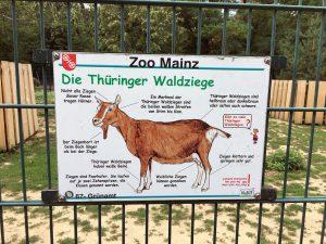 Schlafraubtiere_Mainz_Rhein_Mainzigartig_Wochenende_Familie5