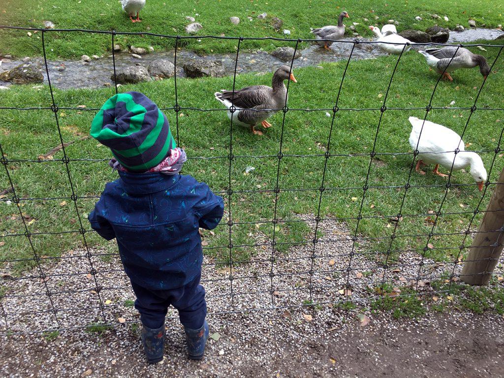 Schlafraubtiere_Wildpark_Poing_Unterwegs_mit_Kindern_Ausflug_München13