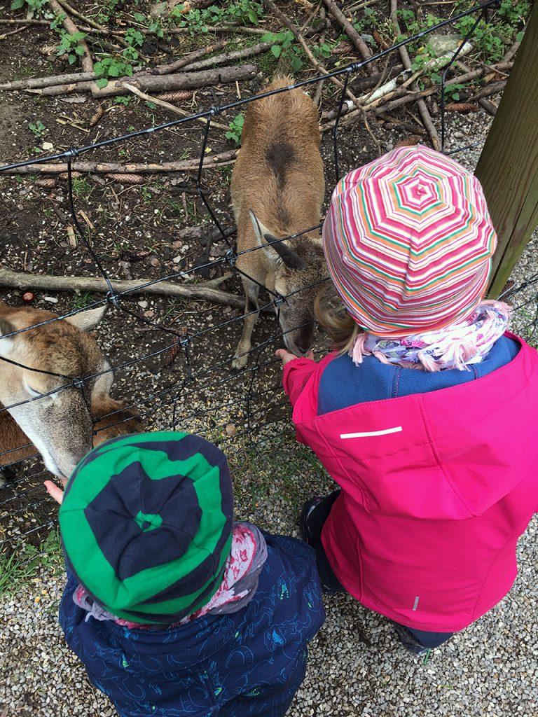 Schlafraubtiere_Wildpark_Poing_Unterwegs_mit_Kindern_Ausflug_München3