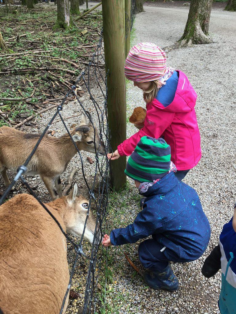 Schlafraubtiere_Wildpark_Poing_Unterwegs_mit_Kindern_Ausflug_München4