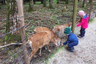 Schlafraubtiere_Wildpark_Poing_Unterwegs_mit_Kindern_Ausflug_München7